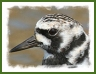 Turnstone Tours - Guided tours and walks in Wales